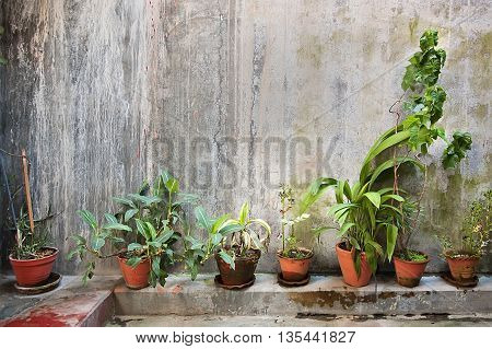 The green plants in a brown pots in on vintage wall creates a beautiful background.