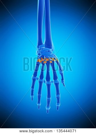 3d rendered, medically accurate illustration of the palmar metacarpal ligaments