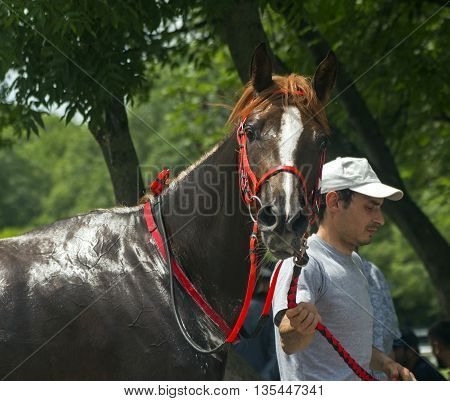 Jockey with his horse before a race