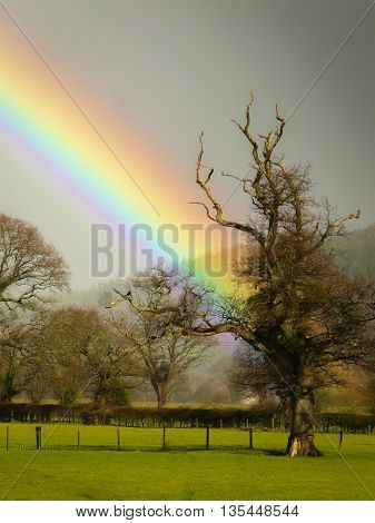Rainbow coming out of grey sky appearing to end at featured tree