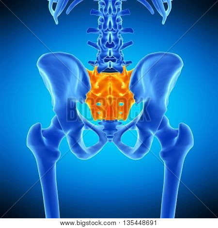 3d rendered, medically accurate illustration of the sacrum