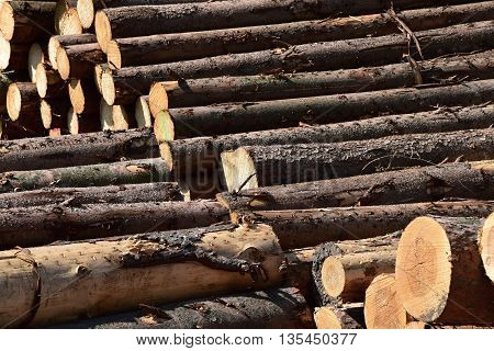 Stock of wooden logs. Freshly chopped tree logs stacked up on top of each other in a pile.