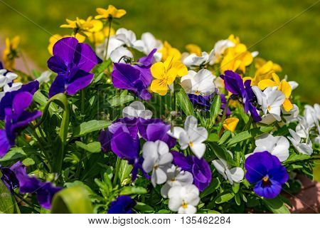 colorful flowers abstract background in the summer