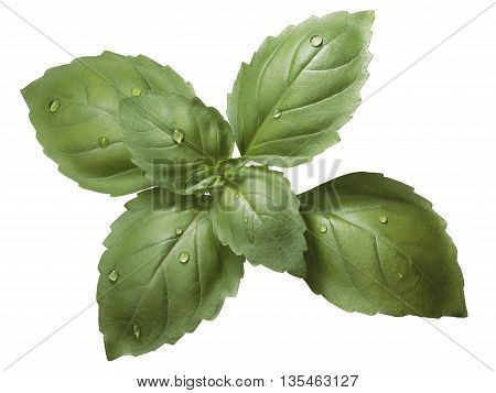 Holy Basil (ocimum Sanctum) Leaves