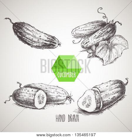 Set of hand drawn cucumbers. Vintage sketch style illustration. Organic eco food