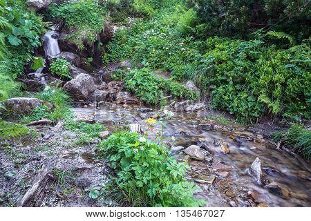 nice beautiful mountain stream with green stones