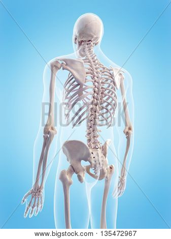 3d rendered, medically accurate 3d illustration of the human skeletal back
