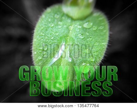 Young plant growing with words grow your business
