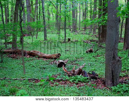 Dark Green Forest landscape with copy space.