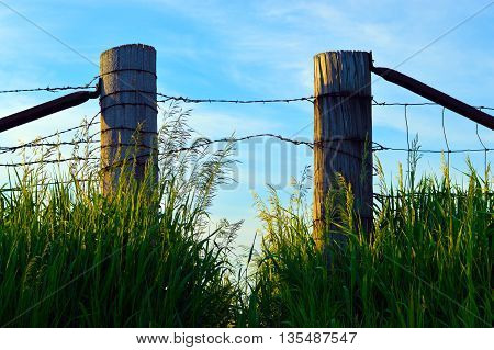 country side fence with surrounding tall grass