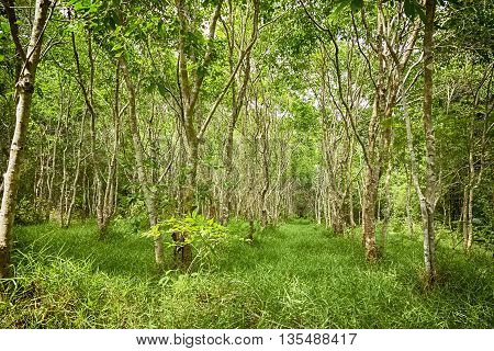 forest trees. naturel green forest in summer