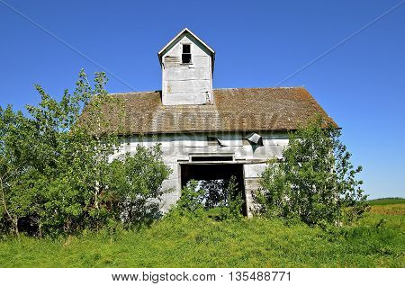 An abandoned farm granary or elevator with an open door is surrounded by volunteer bushes.
