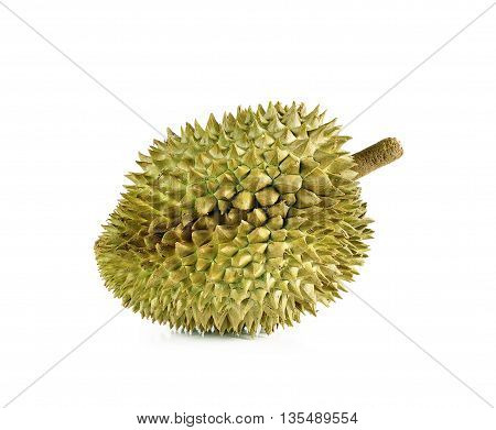 Durian Close Up Isolated On White Background.