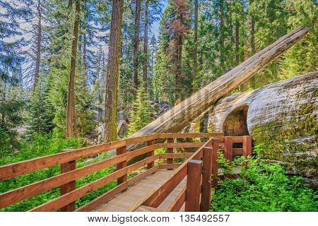A path through nature in the Sequoia Forest