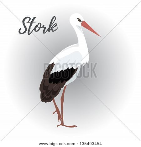 Isolated standing stork bird on a white background vector illustration hand drawn