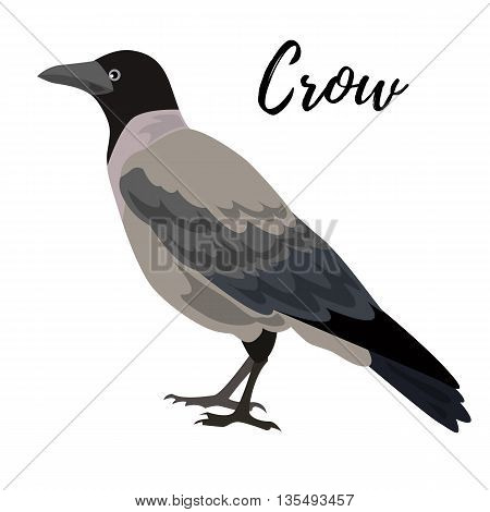 Isolated gray crow bird on a white background vector illustration hand drawn