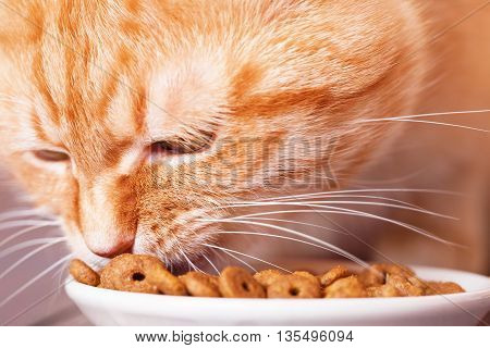 Red cat eating dry food from a plate sitting on the floor close-up