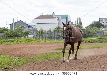 Horse On The Practice Field In A Day