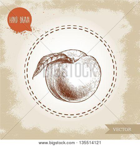 Hand drawn sketch style peach fruit. Vintage eco food vector illustration. Grunge background.