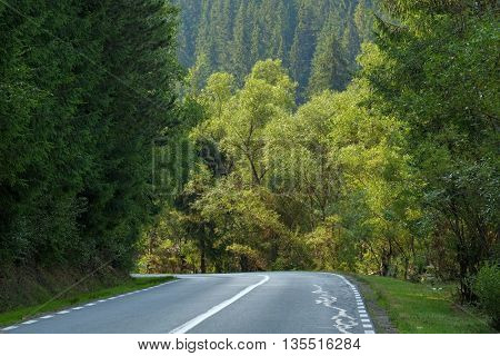 road in forest of Apuseni Mountain, Romania