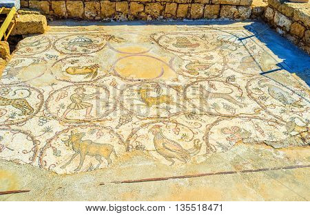 CAESARIA ISRAEL - MAY 19 2016: The ancient floor mosaic in archaeological site decorated with images of wild animals surrounded by grape vines on May 19 in Caesaria.