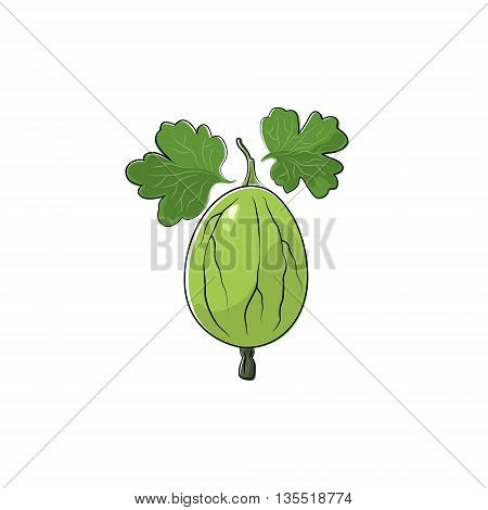 Green Berry Gooseberry Isolated on White Background, Fruit Gooseberry ,Vector Illustration