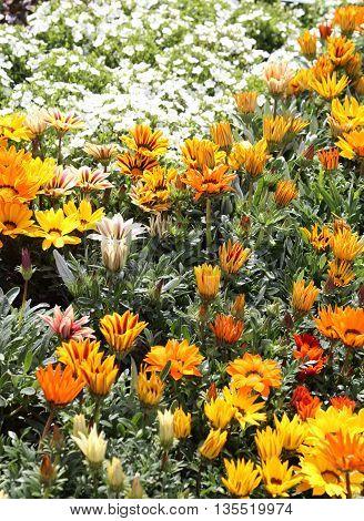 Flowers For Sale In Dutch Flower Market