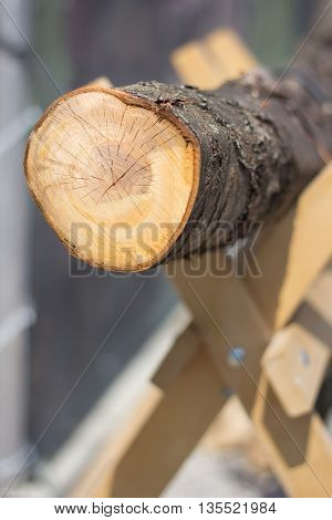 Wood log prepared for cutting with chainsaw