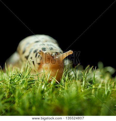 Dreamy Look Of Slug