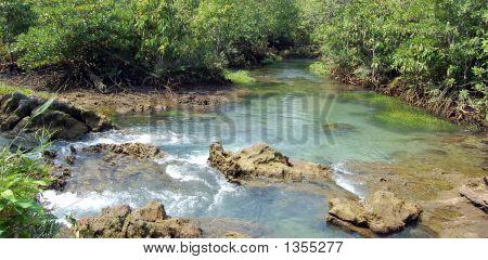 Jungleview