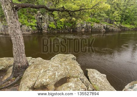 A scenic river landscape with a tree rooted in rock.