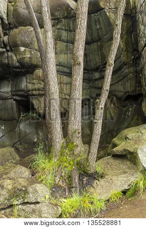 Trees growing in a glacial rock pothole.