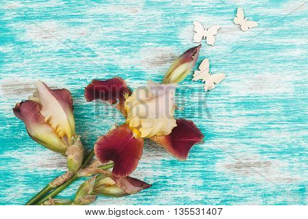 Misty rose irises with decorative butterflies on the light blue background