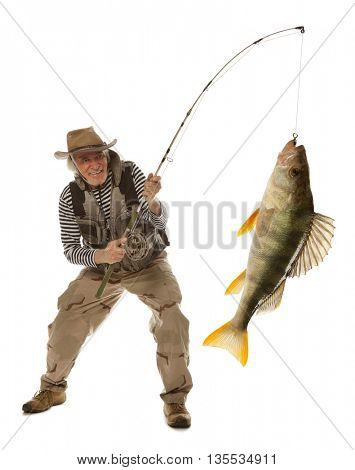 Senior fisherman with big fish - perch (Perca fluviatilis) isolated on white