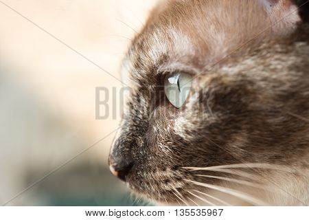 closeup cat portrait cat head eye cat looking outside nature background.