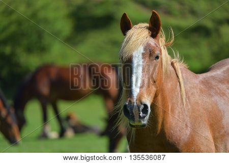 Wonderful close-up photo of light brown horse with another horse in the background