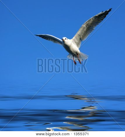 Flying Seagull Over Water