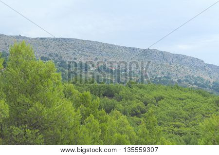 Upper Podstrana Croatia on the Hillside with Green Pines