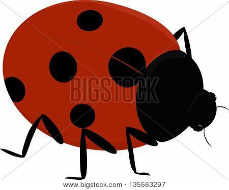 Vector illustration of a cute insect - Ladybug