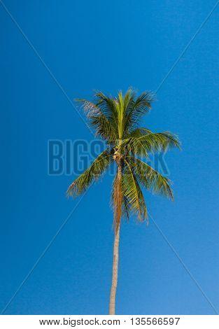 Exotic Getaway Blue View