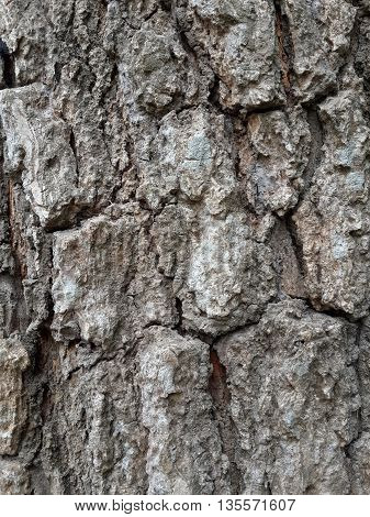 close up dry bark tree texture for background