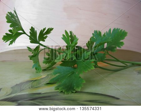 Bunch of fresh parsley on the table
