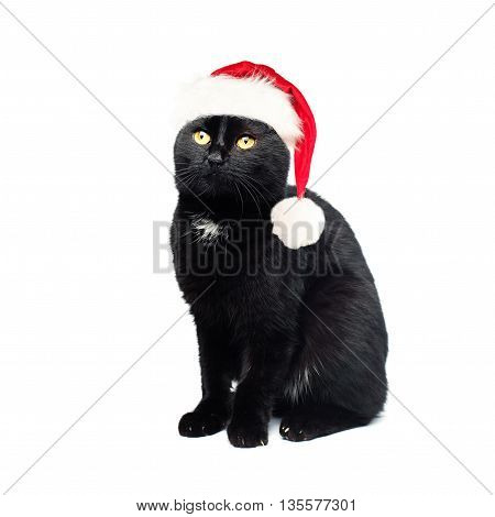 Black Cat in Santa Hat on White Background. Christmas Concept