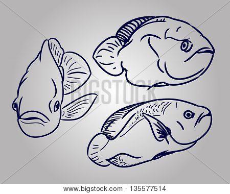 Contour aquarium fish. The set of images in the form of three fish. Vector illustration - fish swims