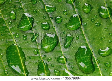 Close up fo Water drops on green leaves