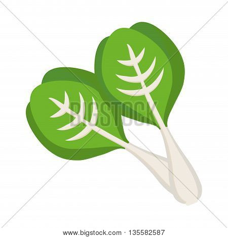 Vegetable represented by lettuce icon over isolated and flat background