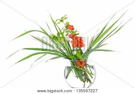 Branch of a quince and decorative sedge in a glass vase. It is isolated on a white background