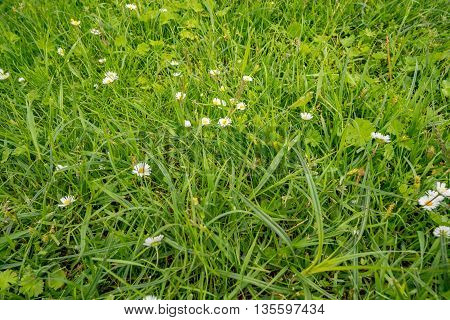 Green field with flowers in early summer in Germany