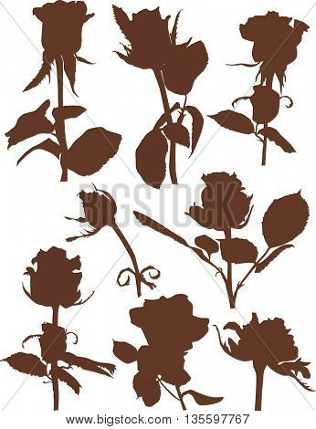 illustration with brown roses isolated on white background