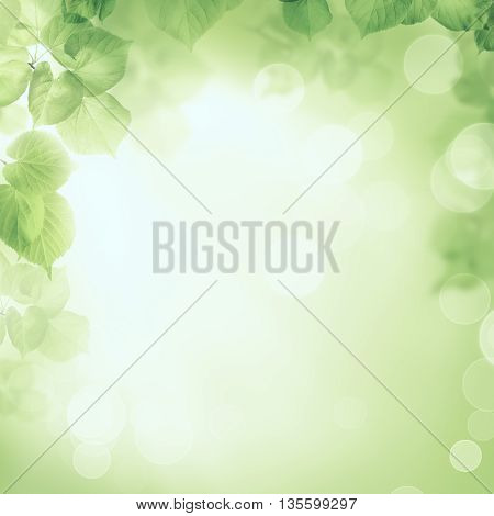 Abstract greenery foliage morning on sunlight background